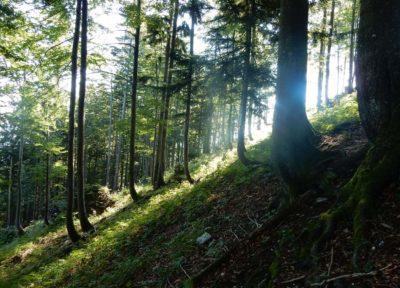 Nationalparkt Kalkalpen