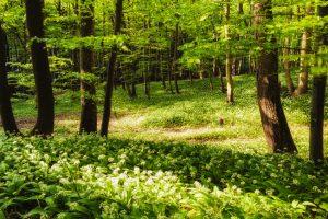 Frühlingsaromen erleben, genießen und schmecken beim Kirchenwirt Ahrer in Großraming