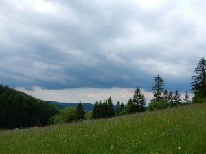 Bunte Frühlingswiesen