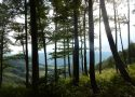 Am Sonnkogel - Blick hinunter nach Hamberg