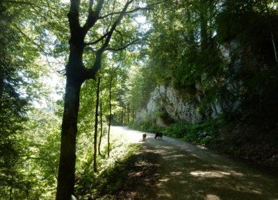 Ein Stück über die Mountainbikestrecke