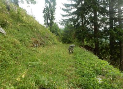Aufstieg über Waldwege ...