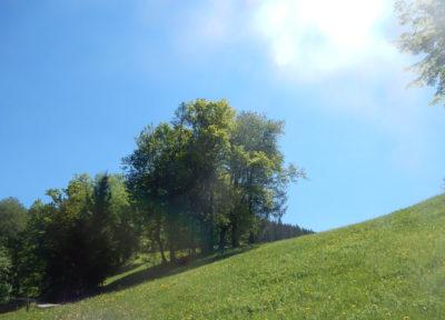 Über die Forststraße, vorbei an Wiesen und Bäumen