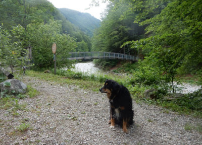 Über die Brücke kommen wir zum Buchsteig