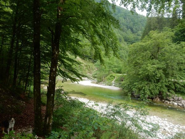 Im Großen Bach ist heute genug Wasser