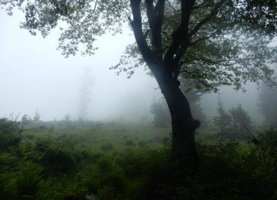 Wie im Märchenwald